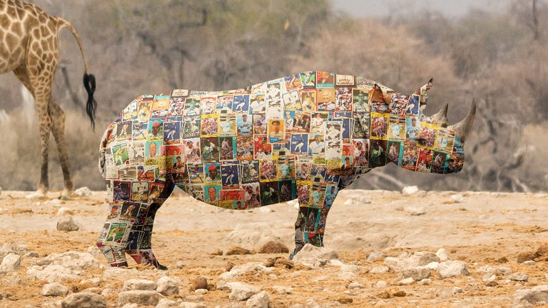 Illustration for article titled Conservation Nightmare: Rhinos Have Become Even More Attractive To Poachers After Evolving Skin Made Of Rare Mint-Condition Baseball Cards