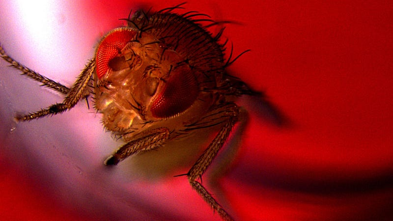 A fly enjoying some red light, nothing to see here.