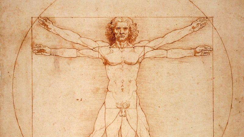 The Vitruvian Man. Wikimedia Commons