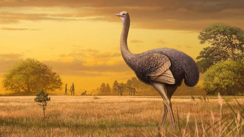 Artist's impression of Pachystruthio dmanisensis, an unusually large bird that lived nearly 2 million years ago in Europe.