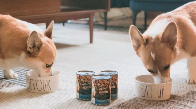 Mix Your Dog s Routine up With the Best Wet Food