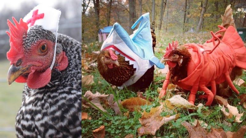 Illustration for article titled El gobierno de Estados Unidos pide a los ciudadanos que no disfracen gallinas en Halloween