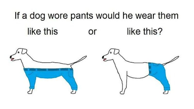 Illustration for article titled Oh My God There Is Only One Way a Dog Would Wear Pants Stop Debating This