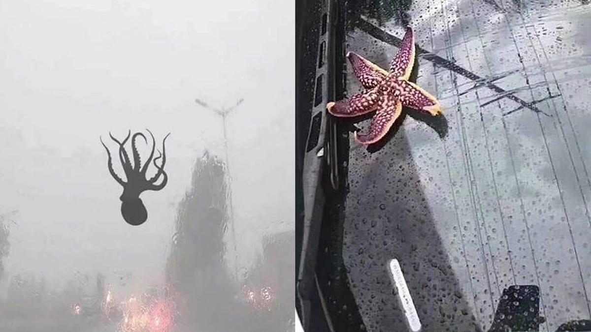 Resultado de imagen para Por qué han caído del cielo pulpos, langostas y estrellas de mar en una ciudad de China