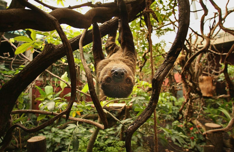 I don't love sloths but I still agree that they need to be left alone. Image: Getty