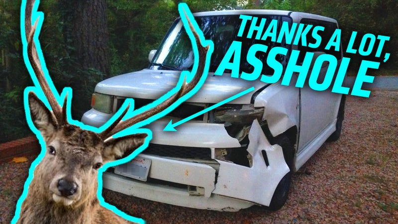 Illustration for article titled I Hit A Deer With My Car And Now I Want To Make It Look Like A Ford Flex