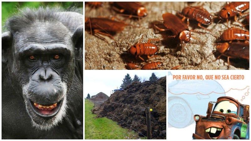 Illustration for article titled Cucarachas en el cráneo, canibalismo entre primates, estiércol que se ve desde el espacio.Lo mejor de la semana