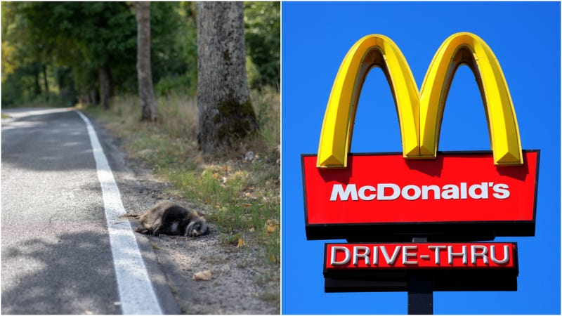 Illustration for article titled Man brought dead raccoon to San Francisco McDonald's, closing restaurant for hours