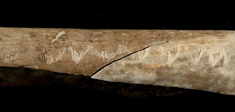 Etchings on a human forearm. (Image: Natural History Museum)
