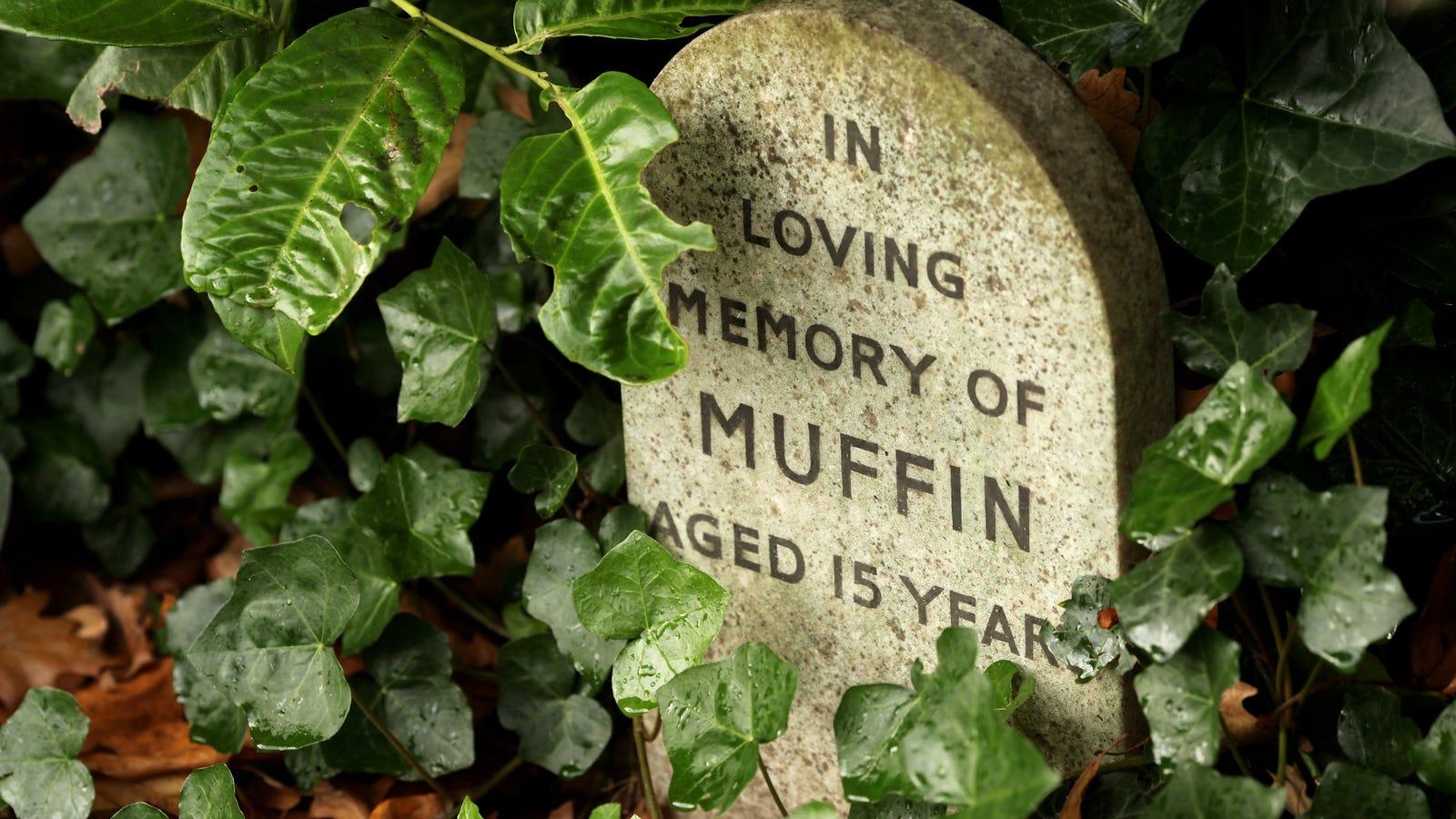 Stop Burying Your Pets in the Backyard