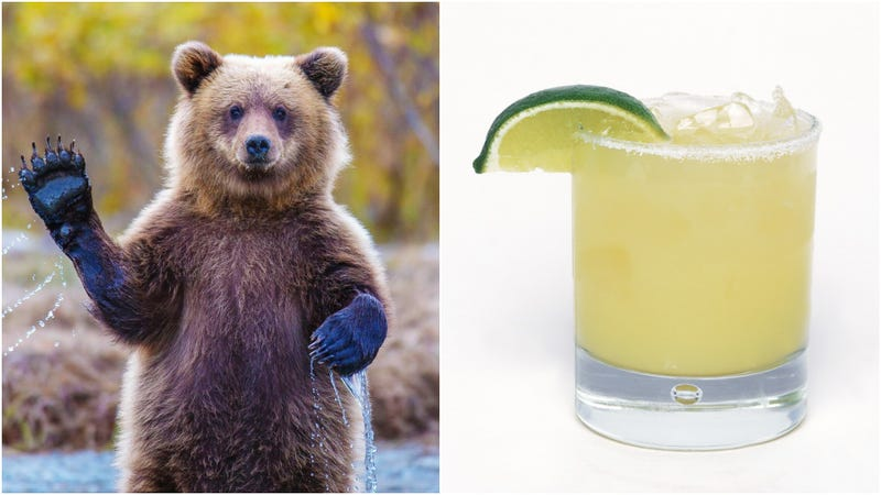 Illustration for article titled This margarita-sippin' hot-tub chillin' bear is ready to celebrate 'MURICA!