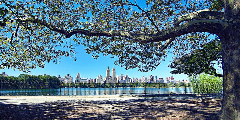 Illustration for article titled A Politician Would Like New York Trees to Have Their Own Email Addresses