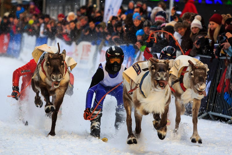 Illustration for article titled Reindeer racing is a real thing