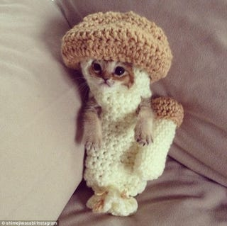 Illustration for article titled Crochet saves kitten! SQUEE!