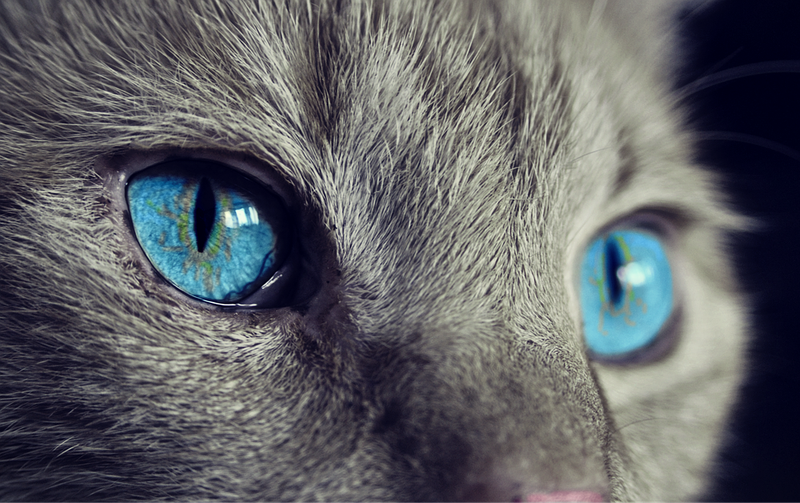 Illustration for article titled Por qué los gatos son incapaces de ver una golosina si se la pones delante de sus narices a plena luz del día