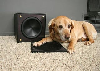 Illustration for article titled Pet-Proof Your AV Gear For Fun and Profit