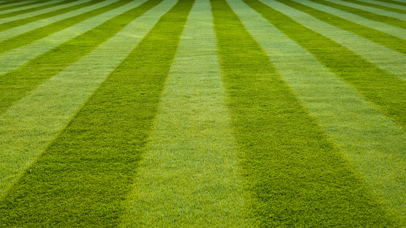 Landscaping Grass Pics : Stop mowing your lawn