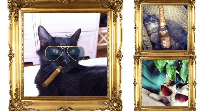 Illustration for article titled The Rich Cats of Instagram: They're Real, and They're Spectacular