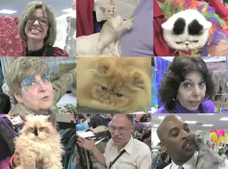 Illustration for article titled Attack Of The Cat People: On The Scene At The CFA-IAMS Cat Championship