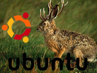 """Illustration for article titled Ubuntu 9.04 Jaunty Jackalope Will Have """"Blindingly Quick"""" Boot Times, Float on the Cloud"""