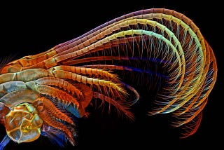 Illustration for article titled The Alien and Eerie Beauty of the Year's Best Microscopic Photos