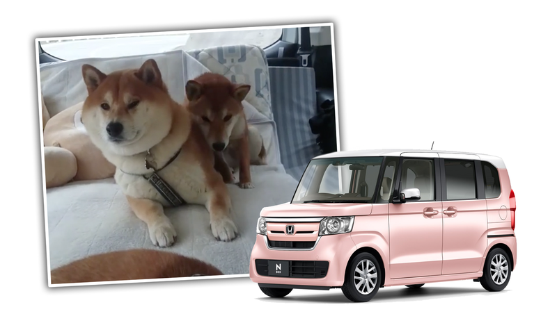 Illustration for article titled Watching These Dogs Lean Into Turns In A Kei Van Will Make All The Pain Go Away