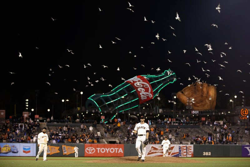 Illustration for article titled Seagulls Are Invading AT&T Park And Shitting Everywhere