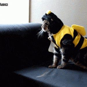Bumblecat: Cat Burglar