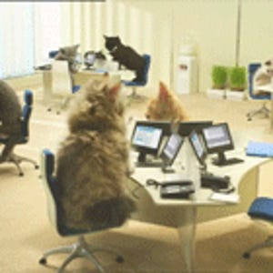 Team Cat HQ