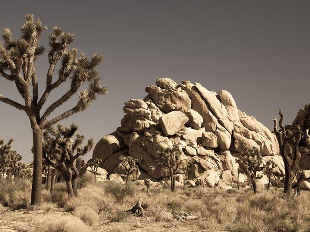 La meilleure chose à propos du désert est que c'est désemparé