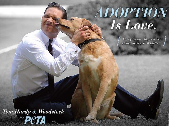 Том Харди и его собака ненадолго заставят вас забыть, что вы ненавидите PETA