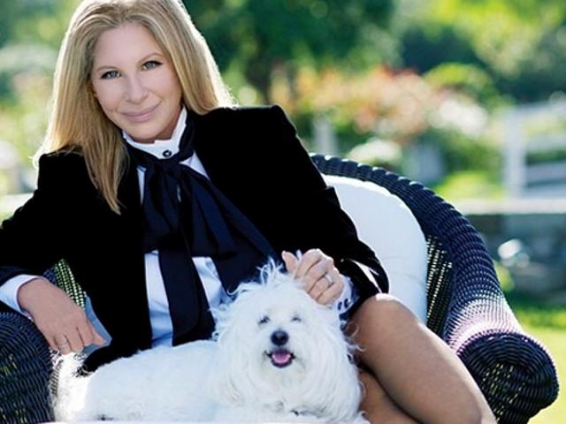 Atendan Penerbangan Dapat Jahitan Selepas Bite Dari Anjing Barbra Streisand