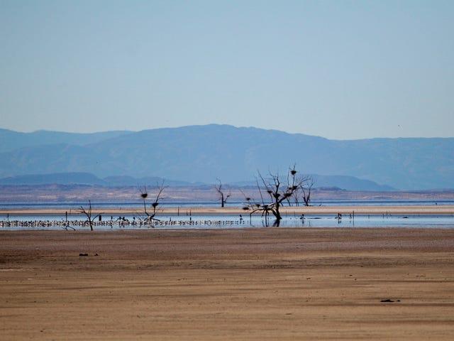 La siccità della California sta rendendo ancora più tossico il suo morente mare interno