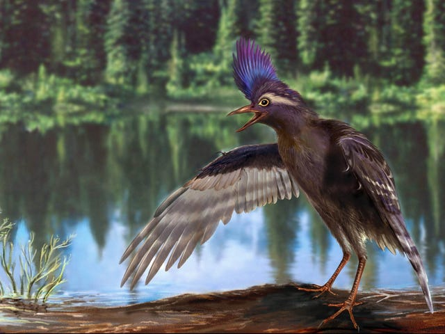 Behold The Oldest Known Relative Of Modern Birds