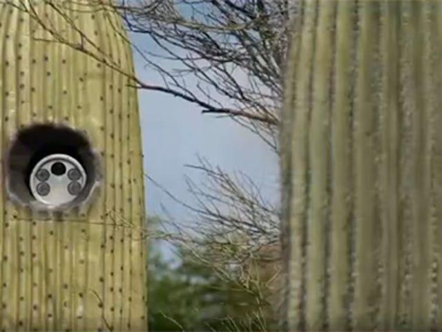 Arizona City Using Fake Cactus To Hide License Plate Cameras