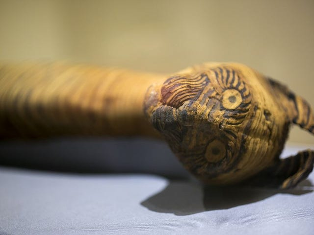 Many Ancient Egyptian Animal Mummies Aren't What They Appear To Be