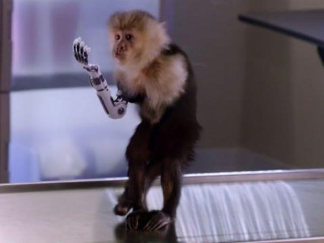 Silicon Valley ja Shit-Slinging Robot Monkey Hand