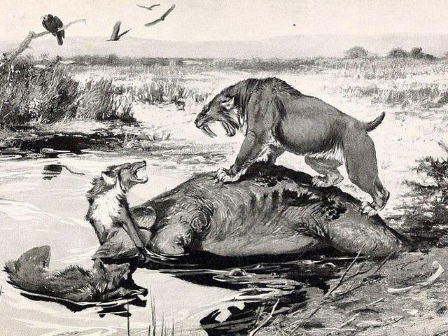 Top 10 des mammifères préhistoriques beaucoup plus froids que les dinosaures