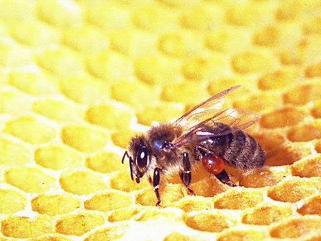 Bees Are Dying and We'll All Pay for It