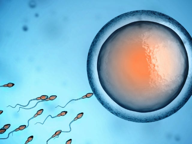 You Could Soon Slap Barcodes on Your Sperm or Egg