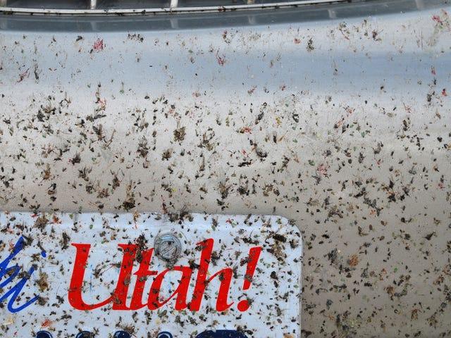 NASA Has a Fix for the Billion-Dollar Problem of Splattered Bug Guts