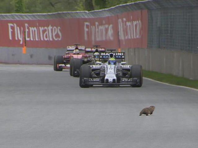 Groundhog evita la morte raccapricciante al Gran Premio del Canada