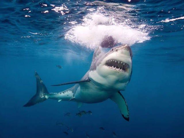 नॉर्थ कैरोलिना के किशोर गंभीर रूप से शार्क के हमलों में घायल हो गए