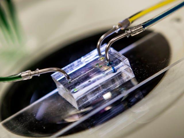 Heart-on-a-Chip này sử dụng lực hấp dẫn để bắt chước nhịp đập của con người