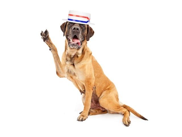 ダイヤモンドという犬がニューヨークのスケネクタディ市長に駆けつけている