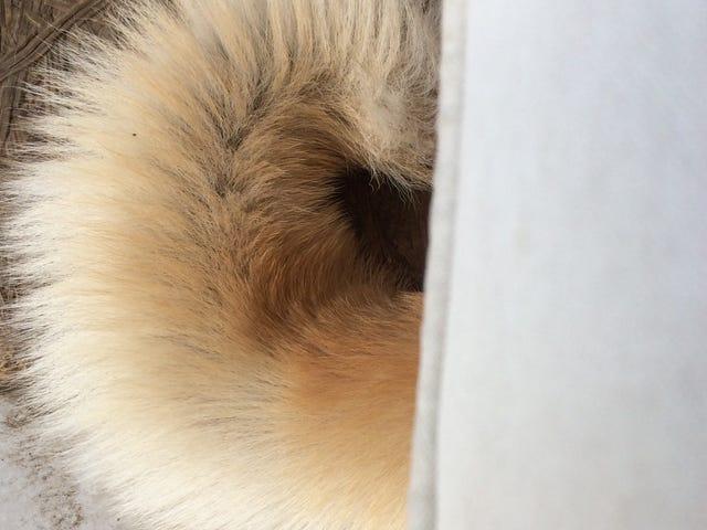 Kutya meleg van
