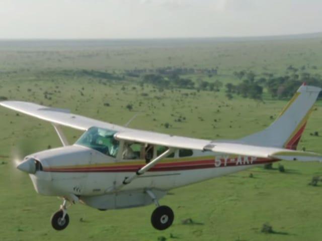 Pelan Mengumpul Data Mengira Gajah Afrika untuk Membendung Keganasan