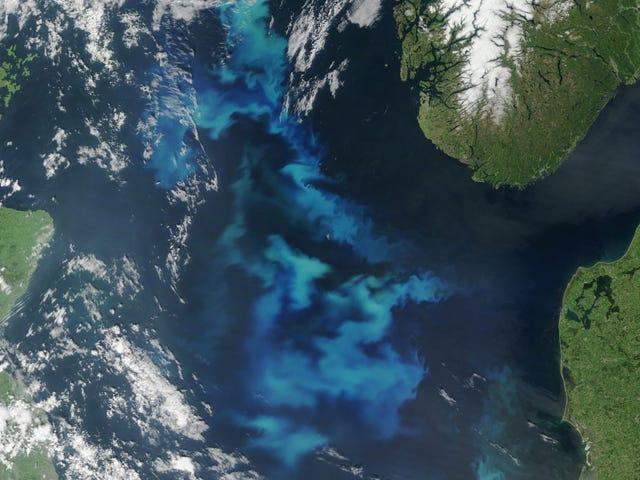 NASA захватывает водоросли Северного моря в полном расцвете