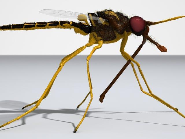 Fly 105 juta tahun ini memberi makan kepada tumbuh-tumbuhan gimnosperma madu dan ubat-ubatan semasa Kretaceous p