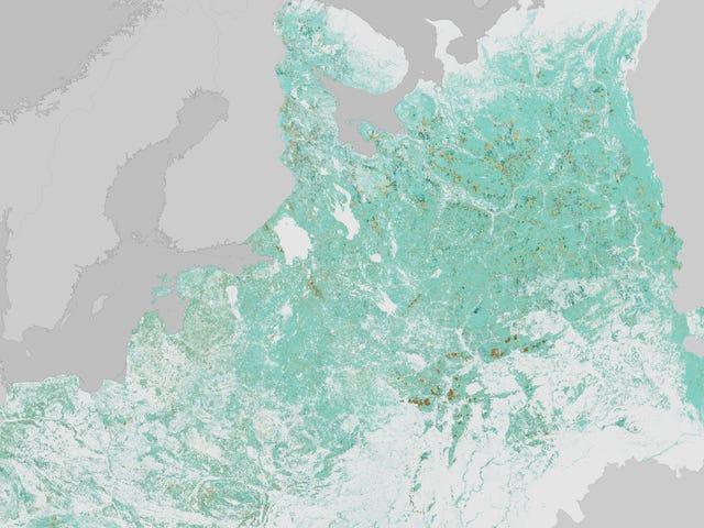 Τα κεντρικά ευρωπαϊκά δάση αναβιώνουν μετά τη διάλυση της ΕΣΣΔ